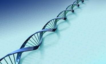 Rheden – Inbreker opgepakt na DNA-match
