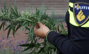 Hendrik-Ido-Ambacht – Politie neemt honderd kilo hennep in beslag