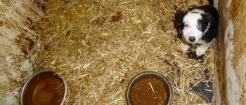 Malafide hondenhandelaar aangepakt 23 honden in beslag genomen (video)