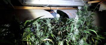 Sas van Gent – Grote hoeveelheid drugs gevonden in winkel