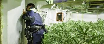 Leeuwarden, Dronrijp – Meerdere invallen en aanhoudingen in henneponderzoek Noord Nederland