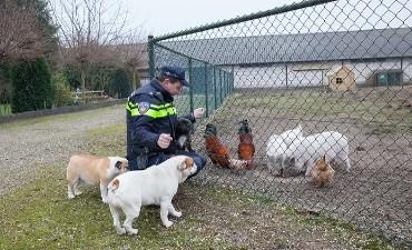 Zwijndrecht – Politie zoekt getuigen dode hanen en duiven