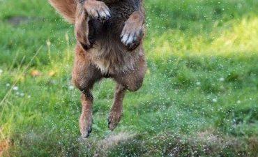 Rotterdam – Diensthond Mees vat koperdieven in de kraag