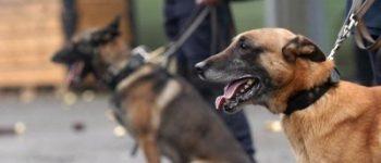 Sneek – Politiehond helpt bij scheiden vechtende groepen