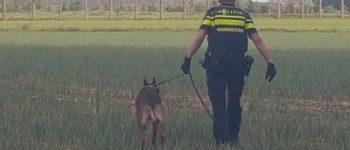 Koewacht – Na achtervolging in bosgebied twee verdachten aangehouden