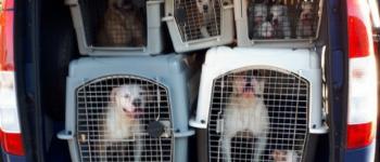 Dode pup in vriezer – 47 honden bij illegale handelaar weggehaald