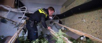 Tilburg – Politie speurt 12.000 hennepplanten en -stekken op