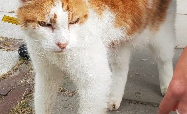 Assendelft – Gewonde kat aangetroffen: getuigen gezocht
