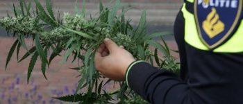 Nieuwegein – Acht kilo hennep in beslag genomen na vondst growshop