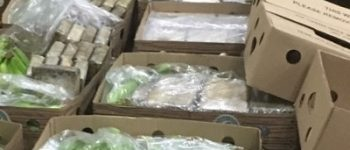 Vlissingen-Oost – 800 kilo cocaïne in lading bananen haven Vlissingen