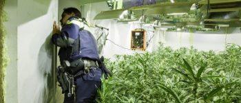 Enschede – Drie arrestaties in onderzoek naar hennepteelt en witwassen in Enschede