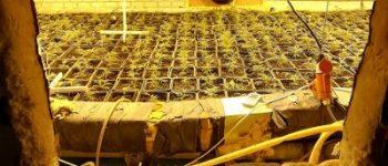 Krabbendijke – Politie houdt beheerder dorpshuis aan voor hennepkwekerij