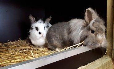 Den Helder – Wie is de eigenaar van deze konijnen?