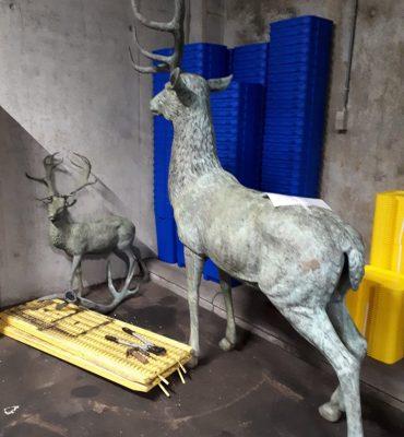 Gezocht – Herten zoeken baasje