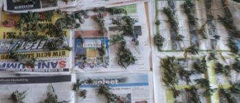 Oostburg – Huiszoeking in Oostburg na overlastmeldingen